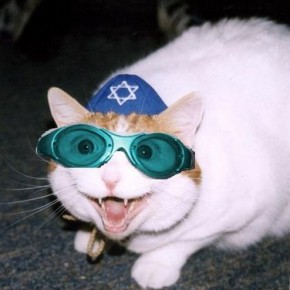 jewish cat